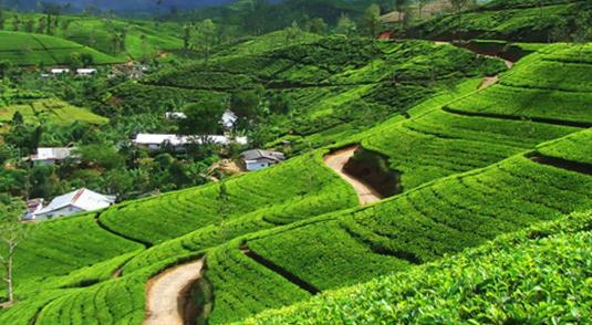3 NT NORTH EAST PACKAGE  2 NT DARJEELING / 1 NT KALIMPONG   Better deals with us.  For more details you may call us at  9289202303 , 011-27058472  sales@starworldtrips.com , info@starworldtrips.com  - by Packages.starworldtrips.com, Delhi