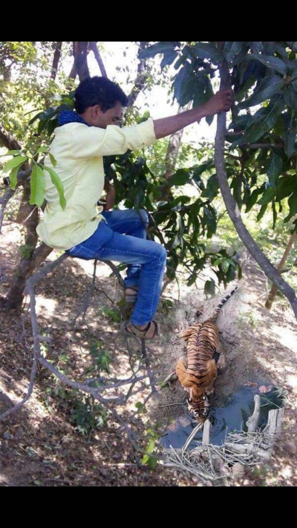 Who wants to go for Tiger Safari  - by Abish Travels, Sandy