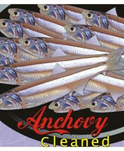 wholesale suppliers of anchovy fish in tuticorin  - by Britto Seafood Exports Pvt Ltd, Chennai
