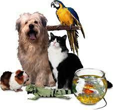Exotic pets in Nilsandra - by AK PETS, Bangalore