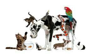 Pet Shop in Austin Town - by AK PETS, Bangalore