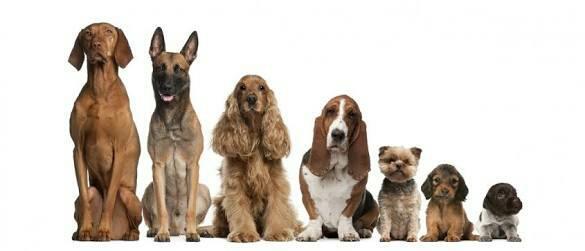 Best pet dogs shop in Kormangala  - by AK PETS, Bangalore