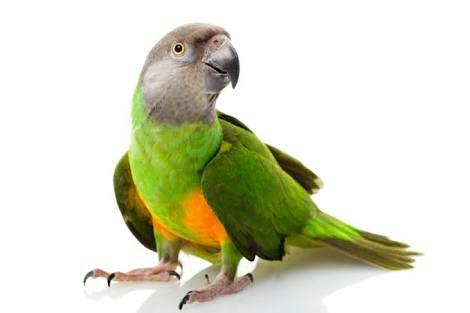 Owning an exotic pet can be both a joy and a challenge. The unique beauty and undeniable personalities of most exotic pets are easily in the plus column. But knowing how to read your exotic pet's health cues can be a challenge, especially  - by AK PETS, Bangalore