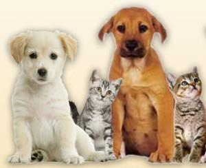 pet clinic in panjim  http://goavets.com/ - by tailwaggerz, Panjim