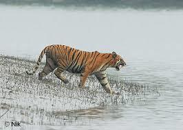 Tour Operator for Sundarban. we offer the best package for trips around the globe - by SOUVENIR TOUR AND TRAVELS, Kolkata