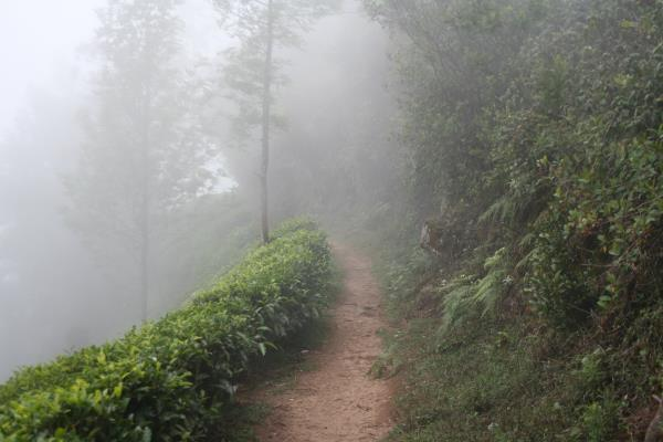 KOLUKUMALAI  YOU WANT TO EXPERIENCE LIFE IN THE MIDST OF A MOUNTAIN VALLEY WITH A ROCKY PEAK ON ONE SIDE,  THICK DENSE FOREST ON ONE SIDE  AND AMAZING VIEW OF THE PLAINS  ESPECIALLY BIRDS EYE VIEW OF THE LIGHTS GLITERRING IN THE NIGHT ON TH - by Southindian Eco Tourism, Madurai