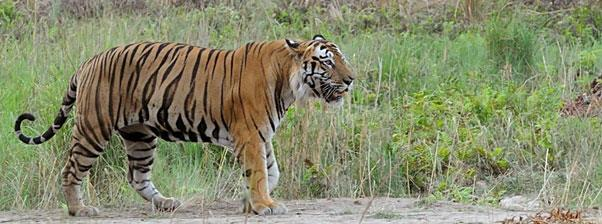 Corbett National Park Tour Package Duration6 Days / 5 Nights Destination CoveredNew Delhi – Corbett National Park Day 1: Arrive Delhi On arrival in Delhi, you will be met and assisted by our representative and transferred to your hotel. O - by Incredible Tour To India, Jaipur