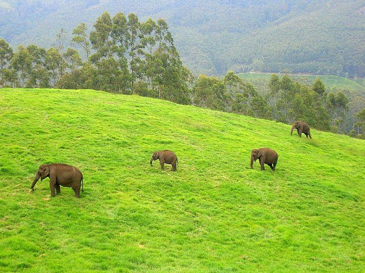 SOUTH ECO TOURISM - SPECIAL OFFER FOR THE MONTH ( GROUPS ONLY ) KERALA TOUR PACKAGE MUNNAR ( 2 NIGHTS 3 DAYS )  Tour Details • Standard Package, Transpotaion Non A/c / Accommodation Non A/c • Deluxe Package, Transpotaion A/c / Accommodation - by Tamilnadu Eco Tourism, Madurai