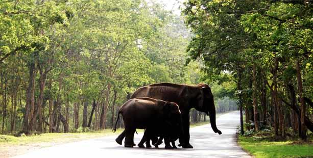 SOUTH ECO TOURISM  - SPECIAL OFFER FOR THE MONTH ( GROUPS ONLY )  KERALA TOUR PACKAGE WAYANAD ( 6 NIGHTS 7 DAYS )  Tour Details •	Standard Package, Transpotaion Non A/c / Accommodation Non A/c •	Deluxe Package, Transpotaion A/c / Accommodat - by Tamilnadu Eco Tourism, Madurai