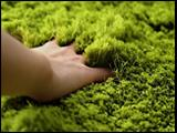 Artificial Grass Mats Suppliers  We are the leading Wholesalers of Artificial Grass Mats in Salem  For our more designs of Artificial Grass Mats: http://carpetcity.in/wall-to-wall-carpets-grass/ - by Carpet City, Salem