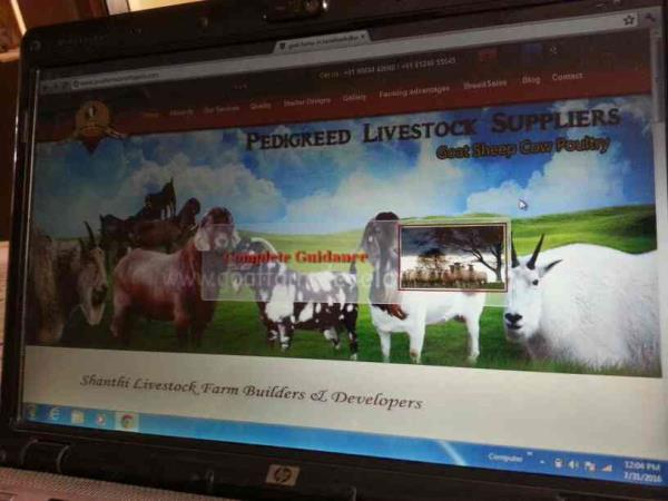 Goat farming Business in India.      kindly call 98844 42068 - by Farm Business India-9884442068, Chennai