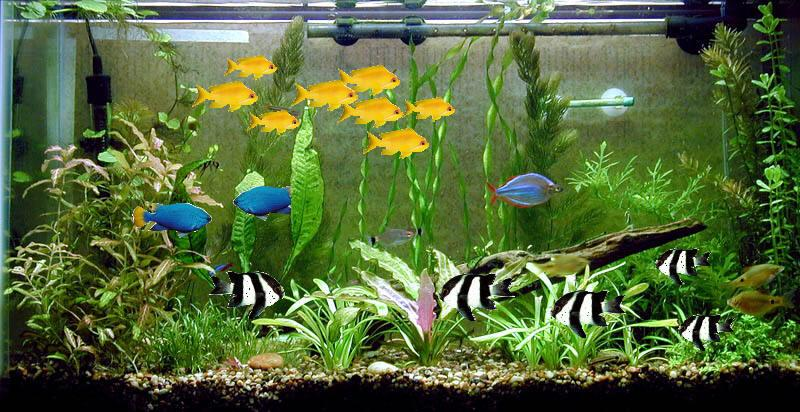 We Are The Best Fish Tank Manufacturer In Madurai .  - by Annamalai Glass 9865573743, Madurai