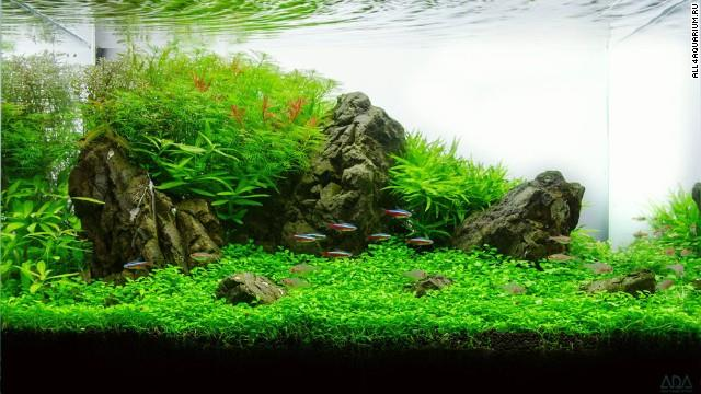 We Are The Best Mountain Fish Tank Manufacturer In Madurai  - by Annamalai Glass 9865573743, Madurai