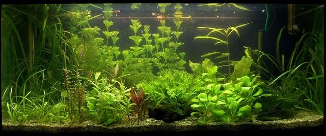 We Are The Best Glass Fish Tank Manufacturer In Madurai - by Annamalai Glass 9865573743, Madurai