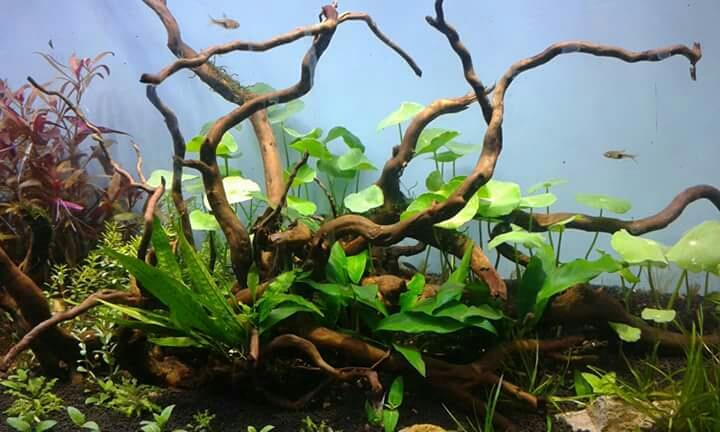 Welcome to the world of Pacific  Aquarium at Masbtank Banjarahills Hyderabad . A perfect Pets and Aquarium store were u Discover the art of fish keeping and learn to keep them in terms of Nature . Explore this great hobby of fish keeping in - by Pacific Aquarium, Hyderabad